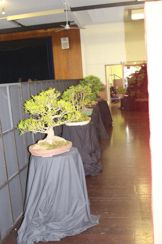 BonsaiShow2016 006